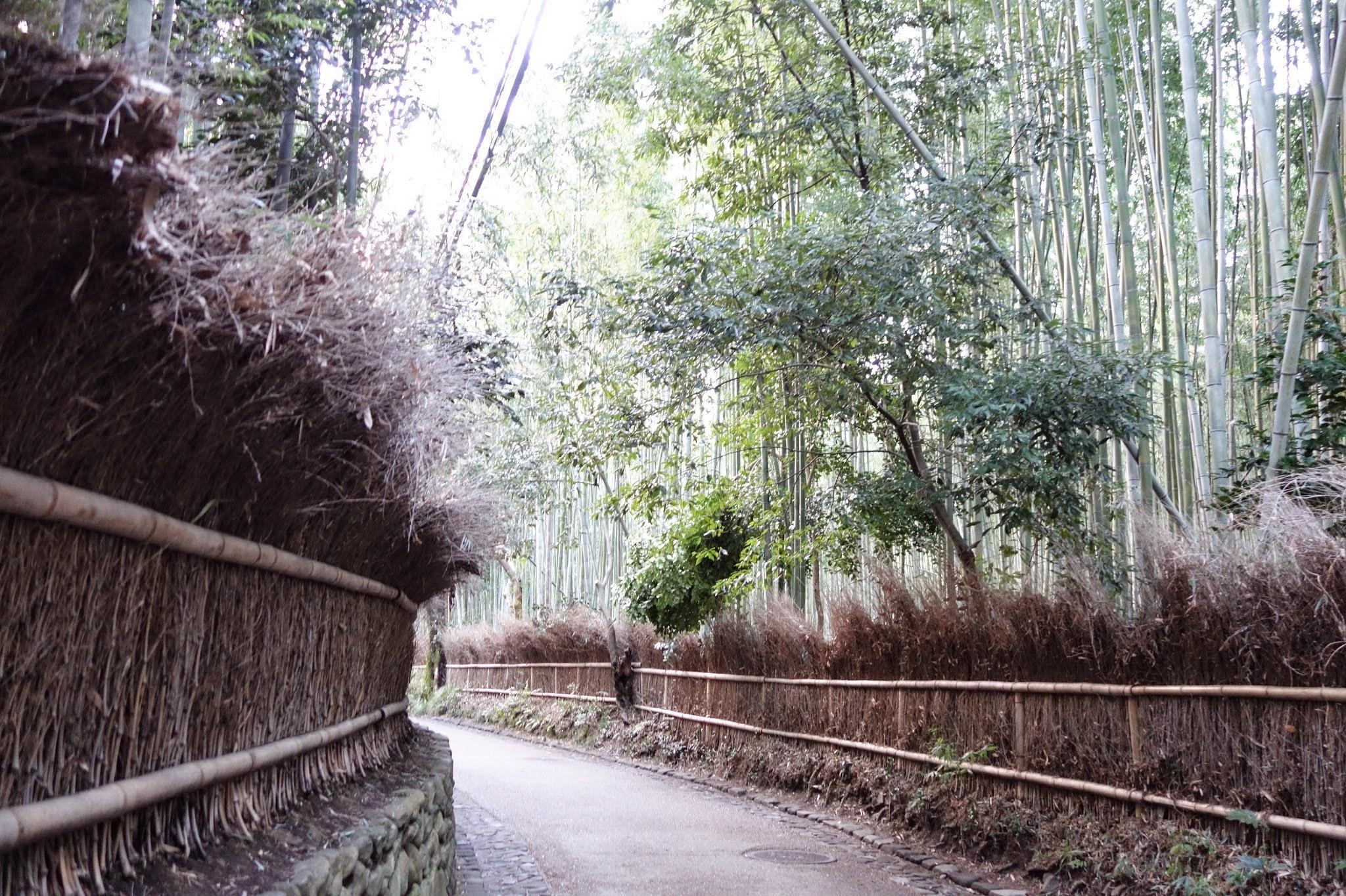京都嵐山 観光日帰り旅行 竹林と食べ歩き編