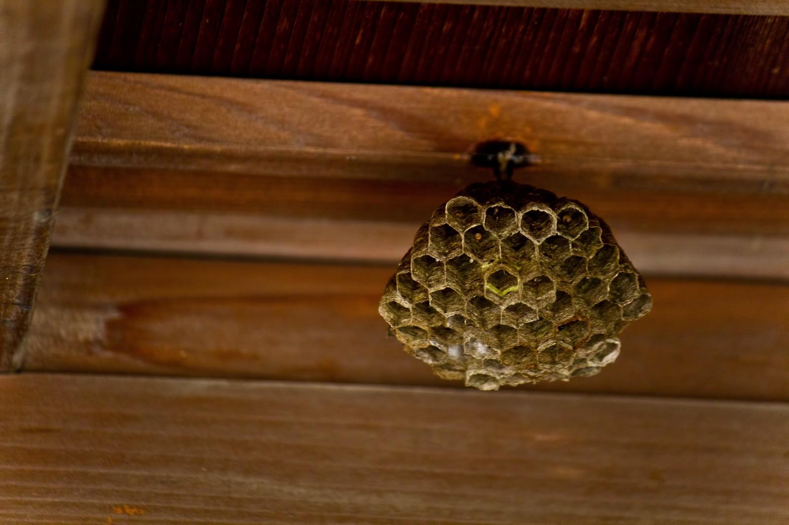 スズメバチの巣駆除は助成金が貰えるぞ