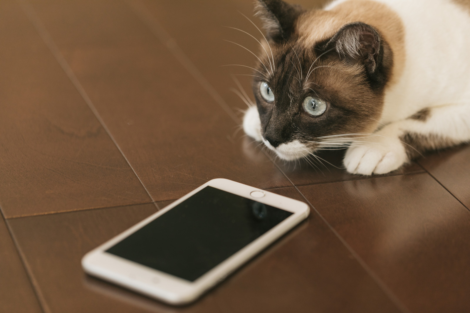 文鎮だった眠れる獅子ソフトバンクのiPhoneでも格安SIMが使えるようになるぞ