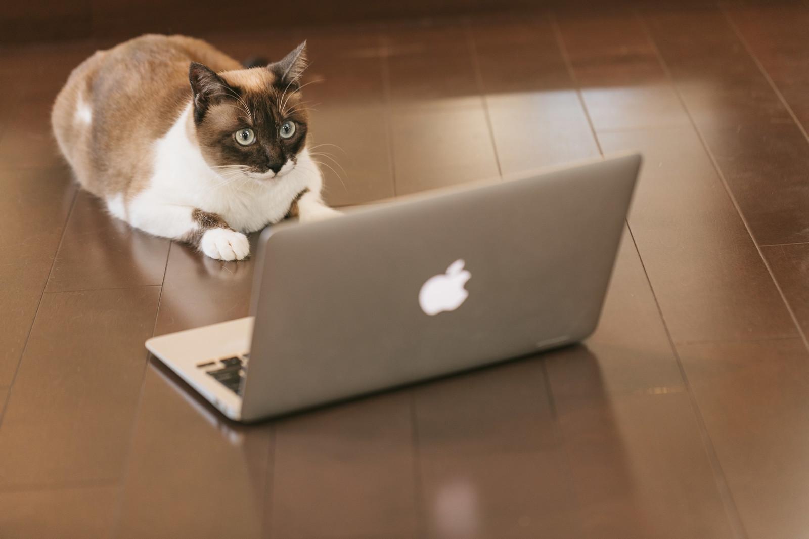 アフィリエイトサイトも企業サイトも成約してもらうには導線が全てだと思う